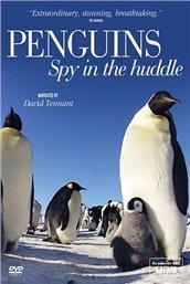 企鹅群里有特务国语